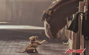 budweiser horse puppy